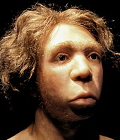 Head of a Neanderthal man with fair skin, blond and curly hair, weak but large eyebrows, long eyelashes, and brown eyes