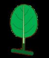 Leaf morphology type unifoliolate.png
