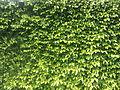 Leafy Background.jpeg