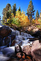 Lee Vining Creek in the Fall.jpg