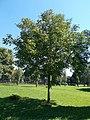 Lendava twin town memorial tree, Vizslapark, 2020 Zalaegerszeg.jpg