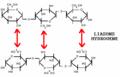 Liaisons hydrogène entre molécules de cellulose.png