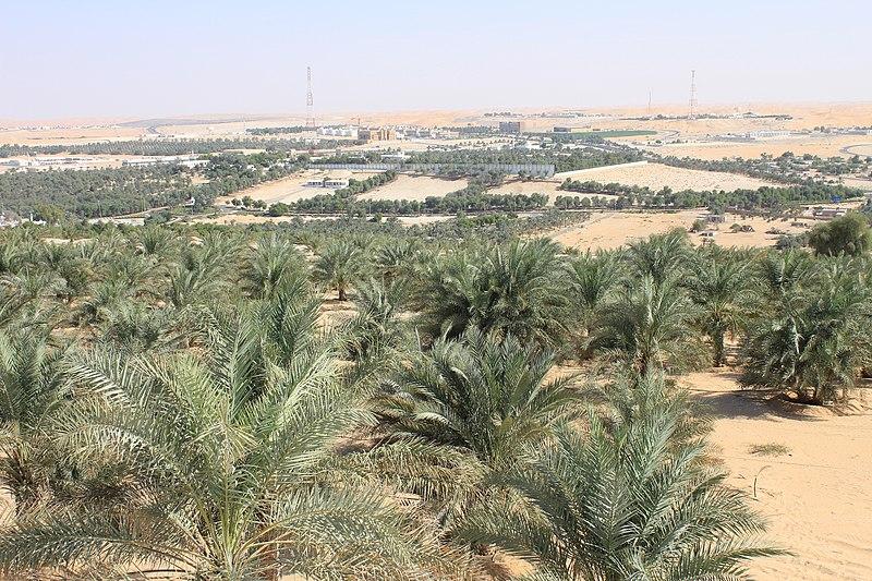 Liwa Oasis - panoramio (1).jpg