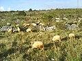 Ljubinje krajolici04803.JPG