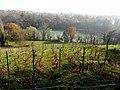 Loex, Promenade le long du Rhone - panoramio (12).jpg