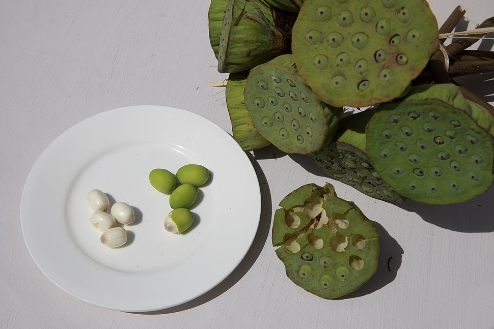 Lotus fruit seeds