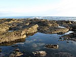 File:Low Tide Rocks at St Baldred's Cradle, Tyninghame - geograph.org.uk - 340310.jpg
