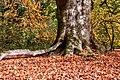 Münster, Park Sentmaring, Naturdenkmal -- 2017 -- 3266-72.jpg