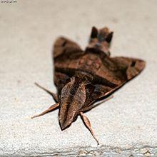 世界で最も危険な毒を持つ蝶、蛾っているのでしょ …