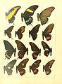 Macrolepidoptera15seit 0029.jpg