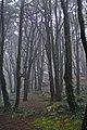 Magic forest (3410708569).jpg