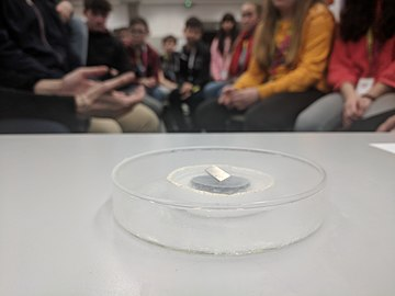 Magnet levitating on top of superconductor cooled by liquid nitrogen.jpg