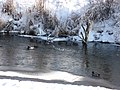 Mallard Ducks - panoramio.jpg