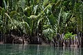 Mangroves- closer view (9165600076).jpg