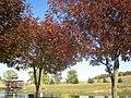 Mansfield Park - panoramio (1).jpg