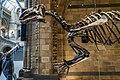 Mantellisaurus front.jpg