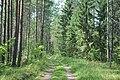 Meža ceļš, Mākoņkalna pagasts, Rēzeknes novads, Latvia - panoramio.jpg