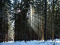 Medvědí stezka, slunce v lese 01.jpg