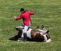 Merfeld, Wildpferdefang, Vorprogramm -- 2014 -- 0499.jpg