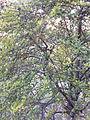 Mesh of leaves.jpg