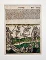 Michael Wolgemut, Imago Mortis (1493) (38412931834).jpg