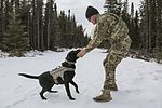 Military working dogs sharpen their skills at JBER 160317-F-YH552-026.jpg