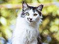 Mirada del Gato.jpg