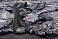 Molten Lava Sampling by Volcanologist.jpg