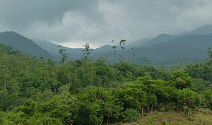 Paniya people - Paniya primarily inhabit Kerala, and the Wayanad, Kozhikode, Kannur and Malappuram districts.