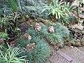 Monte Palace Tropical Garden, Funchal - 2012-10-26 (12).jpg