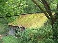 Moos auf dem Dach, Landau, Deutschland - panoramio.jpg