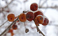 Moscow, ice apples 07.jpg
