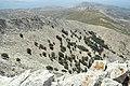 Mount Zas, Naxos, oaks, 080522.jpg