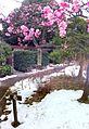 Mukujima hyakkaen - blossoms - winter2014.jpg