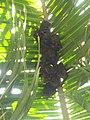 Murcielagos es una palmera.jpeg