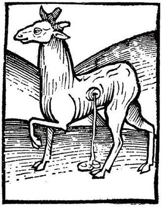 Deer musk - Image: Musk 1616