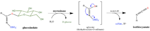 Myrosinase - Image: Myrosinase general mechanism