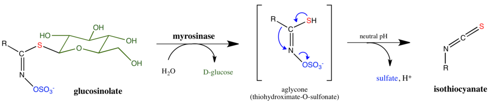 Myrosinase general mechanism