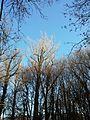 NÖ-Naturdenkmal KO-036 Aupark in Langenzersdorf sl3.jpg
