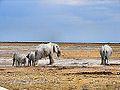 NA Elefanten Etosha Nationalpark.JPG