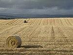 NS6469 harvest.jpg