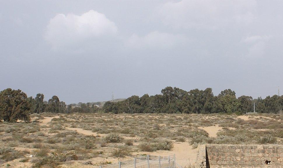 Nabi Rubin 2012