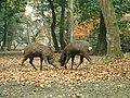 Nara-Japon42.jpg
