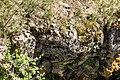 Narcisse Snake Dens 17.jpg