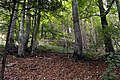 National nature reserve Milešovka in summer 2014 (1).JPG