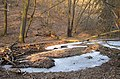 Nature Reserve Týřov 7.jpg