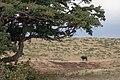Nature of Ngorongoro Conservation Area (13).jpg