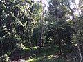 Naturschutzgebiet Bürgle Jungingen 05.JPG