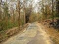 Nedumkayam Reserve Forest, Nilambur - panoramio (4).jpg
