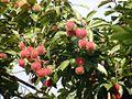 Nephelium lappaceum Frucht.jpg
